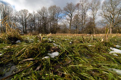 Forest grass Stock Photography