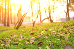 Forest grass, morning. The sun shines on the grass in the morning stock image