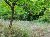 Forest Grass and Wildflowers. Dense ground cover, long grass and wild flowers, in a mountain forest. An area once used for subsistence agriculture and farming Royalty Free Stock Photos