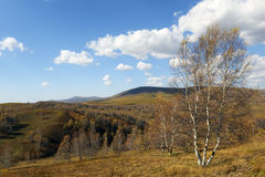 Forest  and grassland in autumn Stock Photography