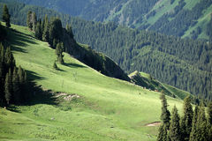 Forest and grassland Stock Image