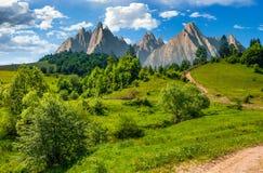 Forest on grassy hillside in tatras Stock Image