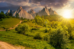 Forest on grassy hillside in tatras at sunset Stock Photography
