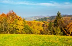 Forest on grassy meadow in autumn at sunrise. Forested mountains in the distance. colorful foliage on trees Stock Image