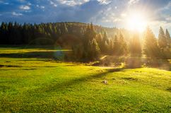 Forest on grassy meadow at foggy sunrise. Lovely nature scenery with forested hill in the distance royalty free stock images