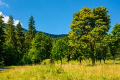 Forest on a grassy meadow in mountains. Beautiful summer landscape of Carpathians Royalty Free Stock Photos
