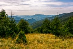 Forest on a grassy meadow in mountains in evening. Lovely summer landscape with Krasna mountain ridge in the distance under the cloudy sky Royalty Free Stock Photos