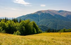 Forest on a grassy meadow on top of a hill. Beautiful summer landscape with high mountain in the distance Royalty Free Stock Images