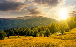 Forest on grassy meadows in mountains at sunset. Beech forest on grassy meadows in mountains at sunset. beautiful Landscape at the foot of Carpathian mountain Stock Photos