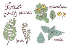 Forest grassy plants set. Of isolated objects. fern, nettle, celandine Stock Photo