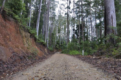 Forest gravel road Royalty Free Stock Images