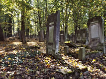 Forest graves. Stock Photography