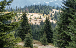 Forest at Great Fatra range, Slovakia Royalty Free Stock Image