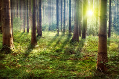 Forest. Great weather in the forest Stock Images