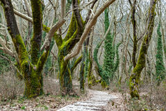 Forest in Greece Royalty Free Stock Images