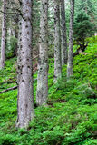 Forest. With green  cover Stock Images