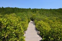 Forest Green del puente Foto de archivo