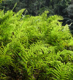 Forest Green Fern Background Stock Photos