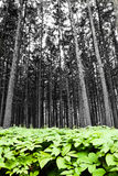 Forest with green foliage Stock Photography