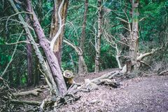 Quiet View of Green Woodland Park in Britain. Trees in Green Forest showing foliage, branches and roots. Quiet View of British Woodland Park royalty free stock photo