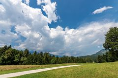 Forest in Summer - Trentino Alto Adige Italy. Forest, green grass and dirt road in summer. Val di Sella Sella Valley, Borgo Valsugana, Trento, Trentino Alto royalty free stock photography