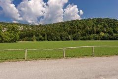 Forest in Summer - Trentino Alto Adige Italy. Forest and green grass in summer. Val di Sella Sella Valley, Borgo Valsugana, Trento, Trentino Alto Adige, Italy stock photography
