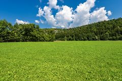 Forest in Summer - Trentino Alto Adige Italy. Forest and green grass in summer. Val di Sella Sella Valley, Borgo Valsugana, Trento, Trentino Alto Adige, Italy stock photos