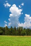 Forest in Summer - Trentino Alto Adige Italy. Forest and green grass in summer. Val di Sella Sella Valley, Borgo Valsugana, Trento, Trentino Alto Adige, Italy royalty free stock image