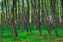Forest with green grass Stock Image