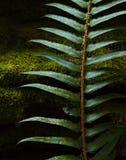 Forest Green i det Stillahavs- nordvästligt arkivfoton