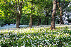 Forest green landscape with tree and white flowers Royalty Free Stock Photos