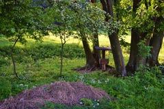 Forest Green lasu halny krajobraz obraz stock