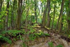 Forest Green lasu halny krajobraz obrazy royalty free