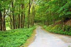 Forest Green lasu halny krajobraz zdjęcia stock