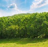 Forest ,green meadow and  sky Royalty Free Stock Photography