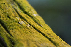 Forest Green moss DOF technic Royalty Free Stock Image