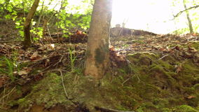 Forest green moss nature stock footage