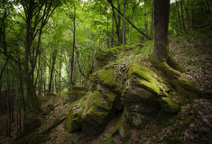 Forest with green moss in summer Stock Photos