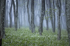 Forest with green plants and white flowers in spring stock photos