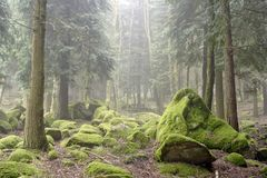 Forest green rocks stock images
