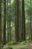The forest. A green forest in the summer Stock Photography