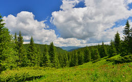 Forest. Green forest in summer mountains Royalty Free Stock Images