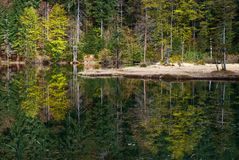 Forest of green trees reflecting in calm lake Royalty Free Stock Images
