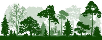 Forest green trees silhouette. Nature, park, landscape. Forest green trees silhouette. Nature and park, landscape. Isolated, vector background stock illustration
