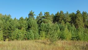 Forest green under the blue sky royalty free stock photography