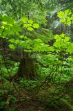Forest Greenery Stock Photography