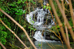 Forest greenery  and mountain stream waterfall with stones Stock Photos