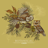 Forest greeting card with owls, spruce and fir Stock Images