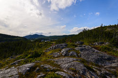 Forest in the Gros Morne. National Park in Newfoundland, Canada Royalty Free Stock Photo