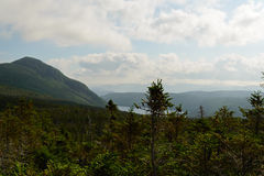 Forest in the Gros Morne Stock Image